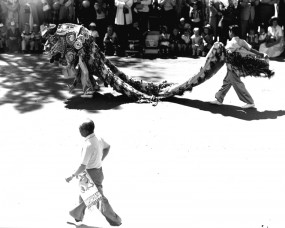 Chinese Dragon in Exhibition Parade, Lethbridge, 27 June 1955.